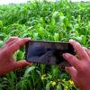 ರೈತ ಬೆಳೆ ಸಮೀಕ್ಷೆ ಆ್ಯಪ್ ಯಶಸ್ವಿ: ಪ್ರಾಯೋಗಿಕ ಹಂತದ ಕಡಿಮೆ ಅವಧಿಯಲ್ಲಿ ಶೇ.88ರಷ್ಟು ಪ್ರಗತಿ