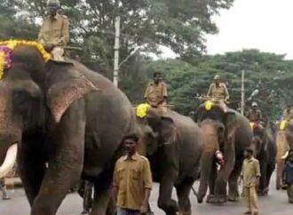 ಮೈಸೂರು ದಸರಾ-2021: ನಾಳೆ ಅಭಿಮನ್ಯು ಆ್ಯಂಡ್ ಟೀಮ್ ಗೆ ಸಾಂಪ್ರದಾಯಿಕ ಸ್ವಾಗತ.